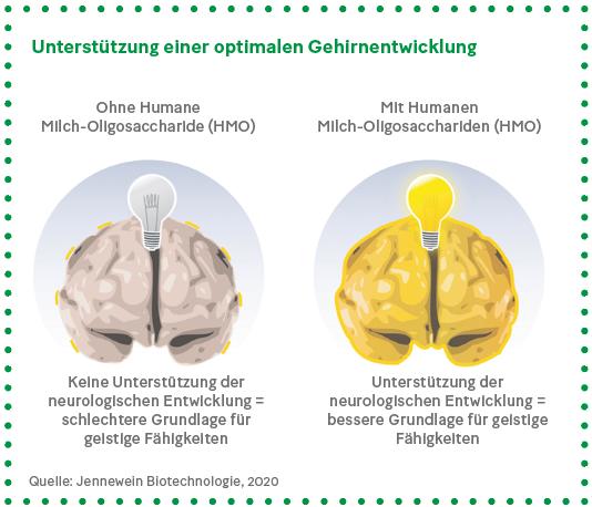Grafik: Unterstützung einer optimalen Gehirnentwicklung
