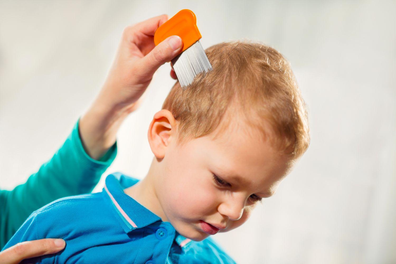 Kopf eines Kindes wird mit Läusekamm gekämmt.